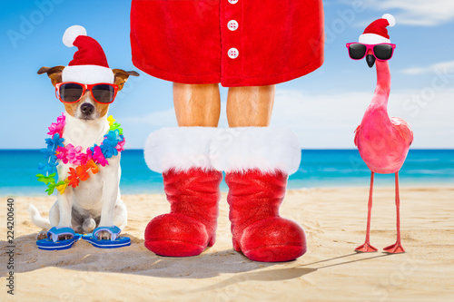 Poster Crazy dog dog and owner as santa claus on christmas at the beach