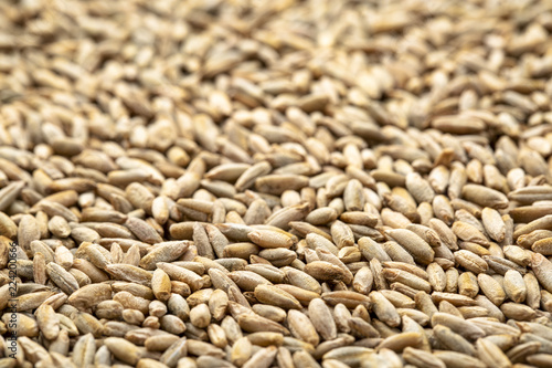 organic rye berries background