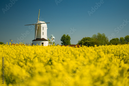 White Windmill in yellow rapeseed field Canvas Print