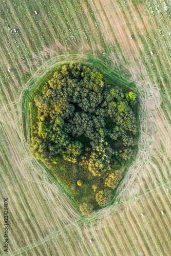 Foto op Plexiglas Luchtfoto Aerial view on small wood patch