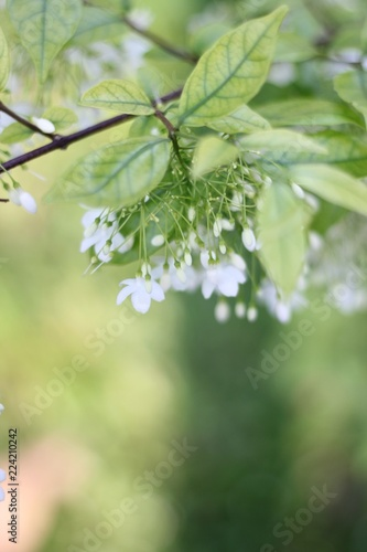 Foto op Plexiglas Lente green leaves of tree in spring