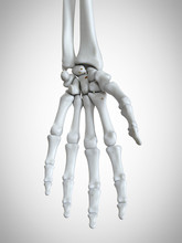 3d Rendered Medically Accurate Illustration Of The Hand Bones