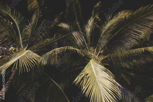 Cadres-photo bureau Palmier Background of palm tree leaves at night