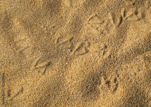 Bird footsteps on the sand