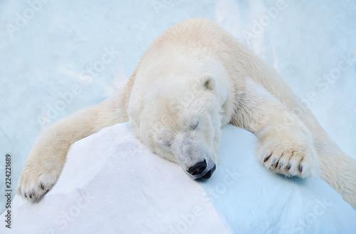Deurstickers Ijsbeer Белый медведь спит.