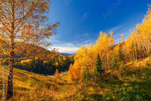 Foto op Plexiglas Herfst Landscape with a trees in autumn colors, Slovakia, Europe.