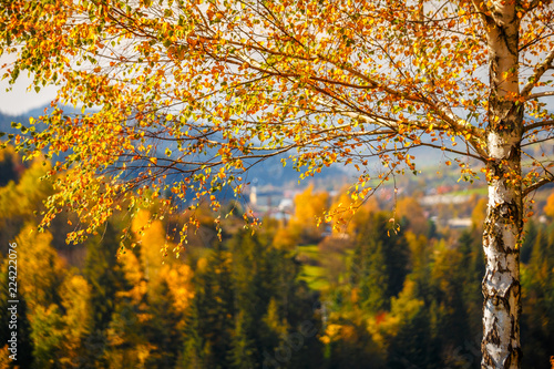 A birch in a foreground of landscape in autumn colors, Slovakia, Europe.