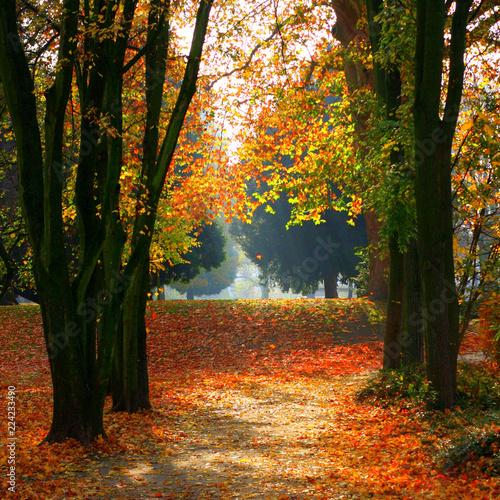 Fotografie, Obraz  Herbstabend