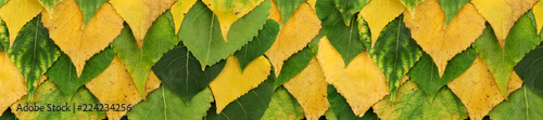 Obraz na plátně autumn poplar leaves