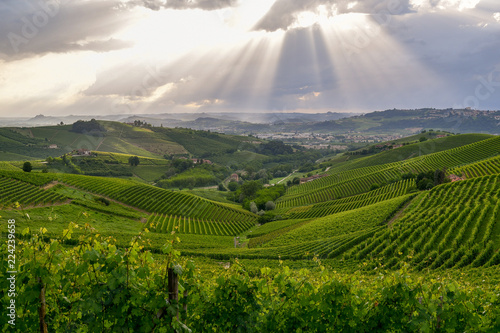 Photo Vista dall'alto di paesaggio con verdi colline e vigneti a Barbaresco, Piemonte