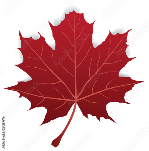 Fotografie, Obraz  Vector Maple Leaf