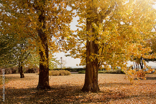 Foto op Canvas Herfst autumn in Gdynia Orlowo
