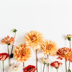 Šareno cvijeće dalija i cinizma na bijeloj podlozi. Ravno ležanje, pogled odozgo.