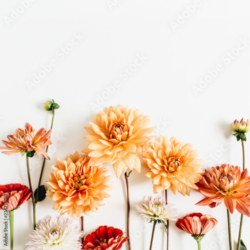 Spoed Foto op Canvas Dahlia Colorful dahlia and cynicism flowers on white background. Flat lay, top view.