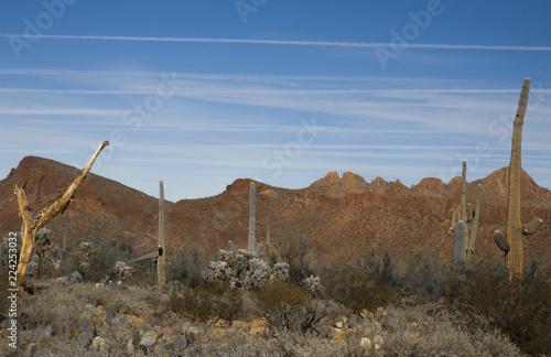 Tuinposter Arizona Arizona Desert Landscape