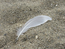 A White Feather In The Sand At The Beach
