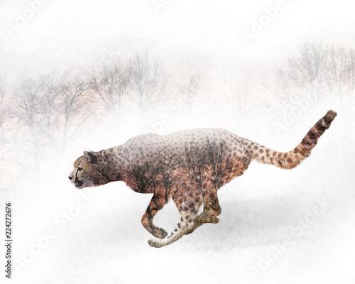 podwojna-ekspozycja-dzialajacego-geparda-i-drzew