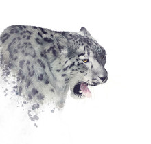 Snow Leopard Portrait Watercolor