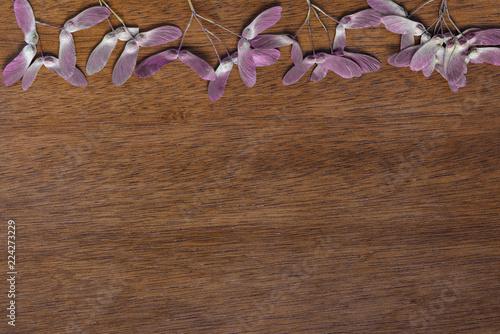 Fotografie, Obraz  dried maple seed pods upper border on wood background