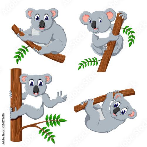 Fototapeta premium kolekcja koali wiszącej na drzewie