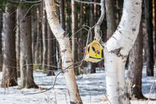 Grain Feeding Trough For Feeding Birds And Squirrels Hangs On Birch Tree In Spring Morning.