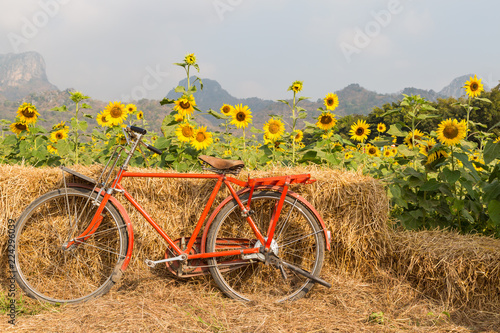In de dag Fiets Classic red bicycle with sunflower