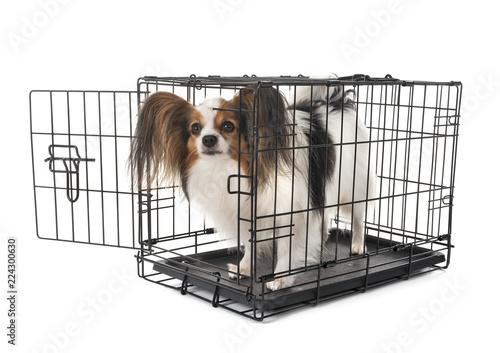 Fototapeta  little dog in cage