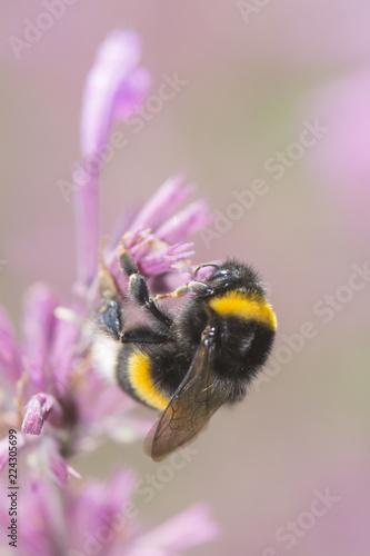 Foto a bee in closeup