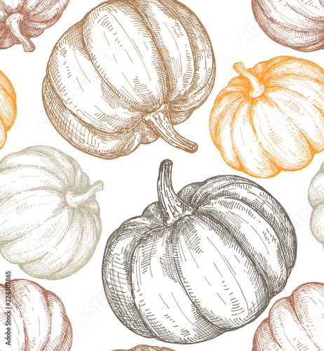 Fototapeta Vector hand drawn sketched pumpkin seamless pattern
