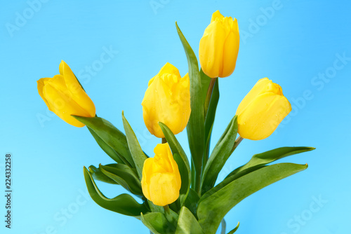 Tuinposter Bloemen bouquet of yellow tulips on a blue background