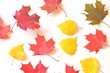 Autumn leaves/ Red, yellow maple and birch leaves on a white background. Flat lay natural background
