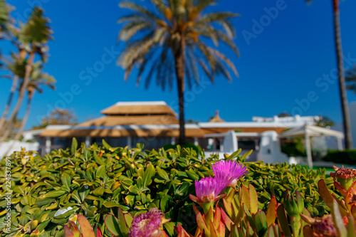 Luxury property, beachside apartments  with beautiful blue skies, palm trees with gardens and sea and beach views Poster Mural XXL
