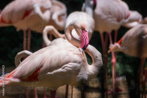 Foto op Aluminium Flamingo flamingo pose as