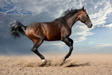 The Bay Horse Gallops Rapidly