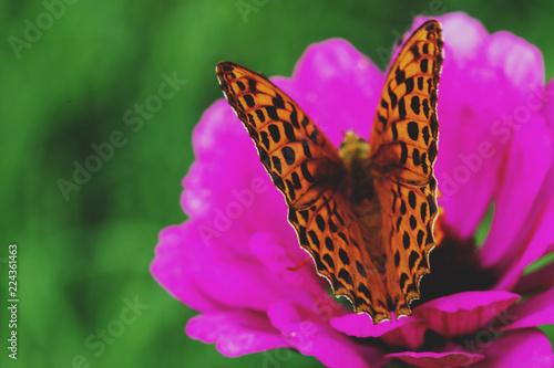 Butterfly on flower. Macro Photo.