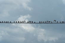 Birds Sitting On The Wires Wit...