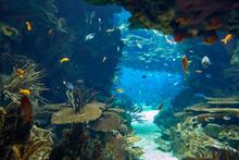 The Underwater World In The Main Tank Of The Lisbon Oceanarium. Portugal