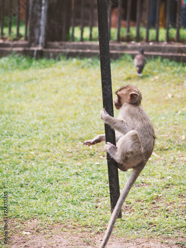 monkey in ,Lopburi, Thailand.