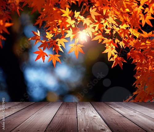Beautiful autumn season backdrop.