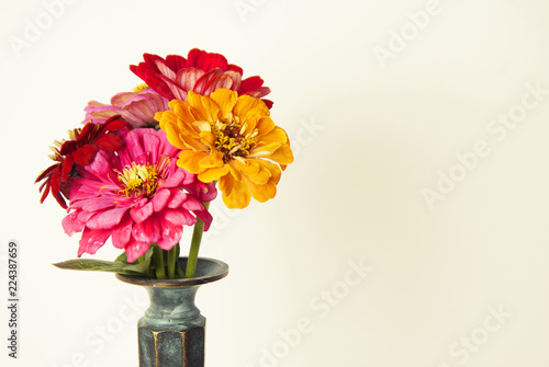 Fotobehang Bloemen Bouquet of pink zinnia flowers in a vase isolated. Indoor. Copy space.