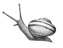 Snail, Ink Hand Drawn Vintage ...