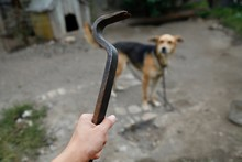 The Owner Threatens The Dog. D...