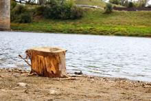 Tree Stump On The Sandy River ...