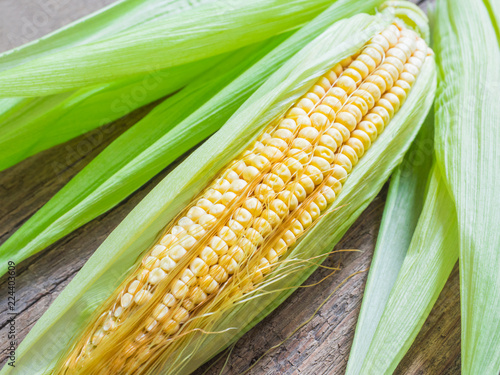 Fresh corn on the cob. Yellow corn, green leaves. Closeup