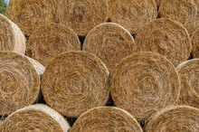 Round Bales Of Hay Stacked In ...