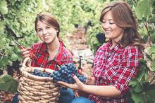 Zwei Junge Frauen Bei Der Wein...