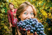 Zwei Junge Frauen Bei Der Weinlese In Deutschland (Trollinger)
