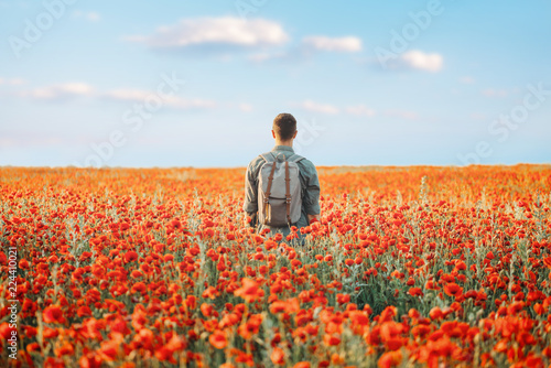 Traveler man walking in poppies flower meadow.