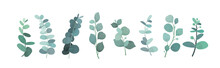 Vector Illustration Of Eucalyptus Silver Greenery Set, Leaves And Branches For Decoration Of Greeting Cards And Invitations. Decorative Beautiful Elegant Green Branches In Flat Style.
