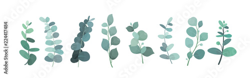 Fotografia Vector illustration of eucalyptus silver greenery set, leaves and branches for decoration of greeting cards and invitations